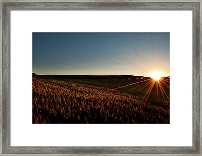 Framed Print featuring the photograph The Field Of Gold by Mark Dodd