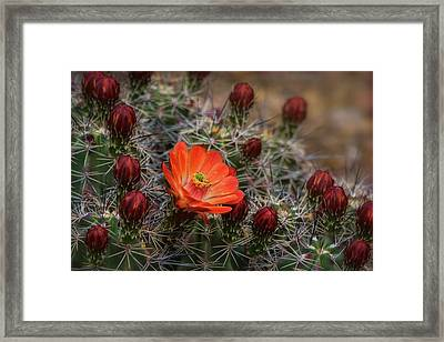 Framed Print featuring the photograph The First Bloom  by Saija Lehtonen