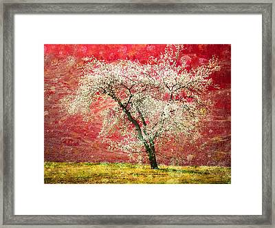 The First Blossoms Framed Print by Tara Turner