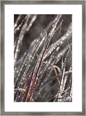 The First Frost Framed Print
