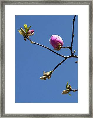 The First To Bloom Framed Print