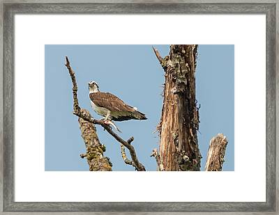 The Fish Tree Framed Print by Loree Johnson