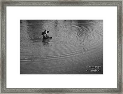 The Fisherman Framed Print