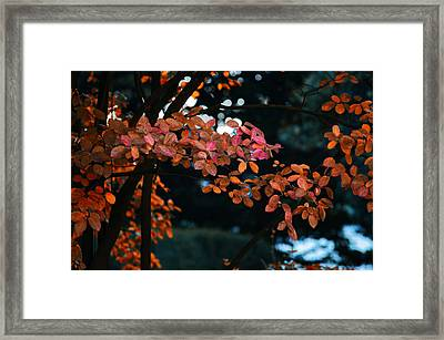 The Flair Of Autumn Framed Print by Nicole Frischlich