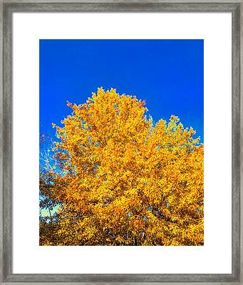 The Flare Of Fall On A Clear Day Framed Print