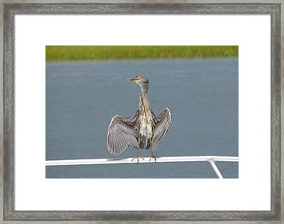 The Flasher 1 Framed Print by Bruce W Krucke