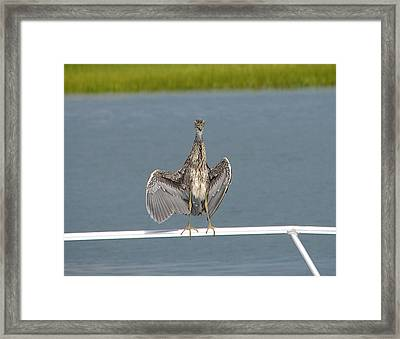 The Flasher 2 Framed Print by Bruce W Krucke