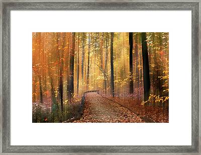 Framed Print featuring the photograph The Flickering Forest by Jessica Jenney