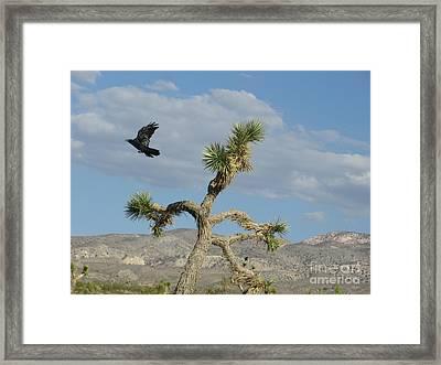 Framed Print featuring the photograph The Flight Of Raven. Lucerne Valley. by Ausra Huntington nee Paulauskaite