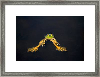 The Floater Framed Print by Donna Kennedy