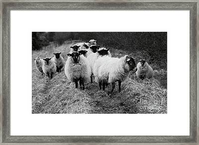 The Flock 1 Framed Print