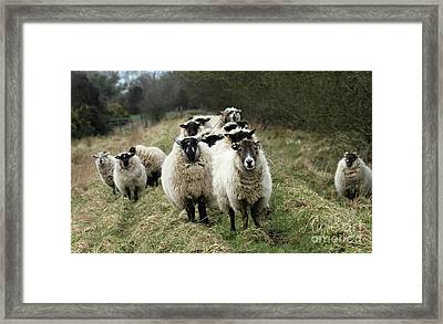 The Flock 2 Framed Print