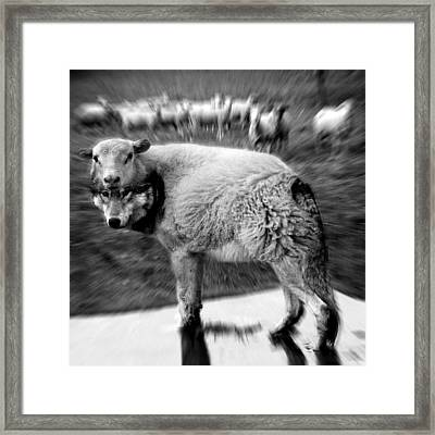 The Flock Is Safe Grayscale Framed Print