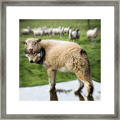 The Flock Is Safe Framed Print by Marian Voicu