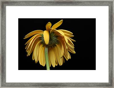 The Flop Framed Print by Dan Holm
