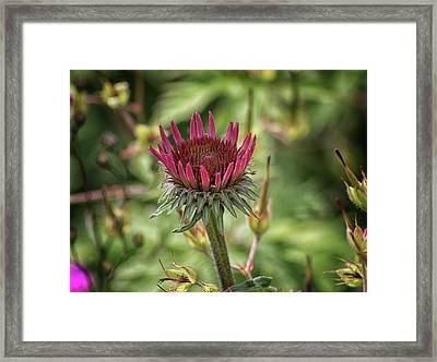 The Floral Crown Framed Print