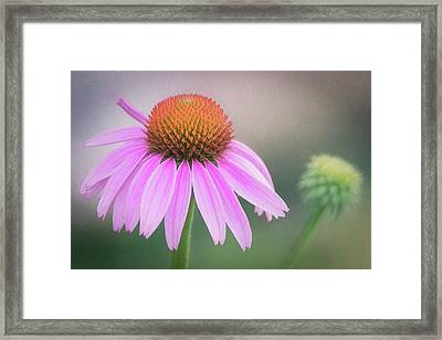 The Flower At Mattamuskeet Framed Print