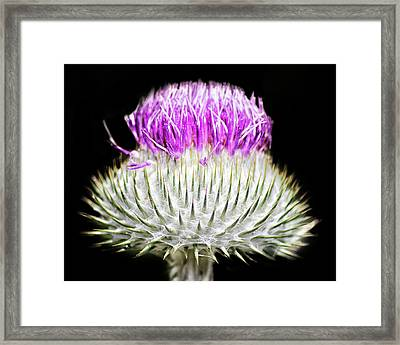 The Flower Of Scotland Framed Print