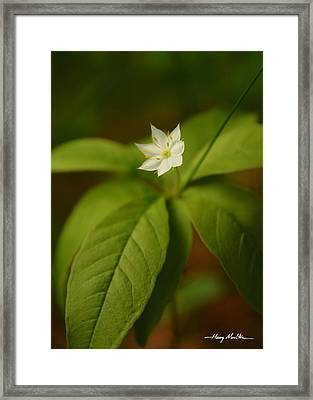 The Flower Of The Dark Woods Framed Print