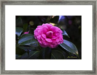 The Flower Signed Framed Print