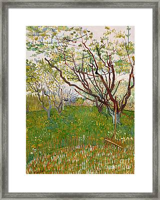 The Flowering Orchard, 1888 Framed Print by Vincent Van Gogh