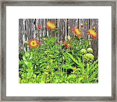 The Flowers Along The Fence  Framed Print