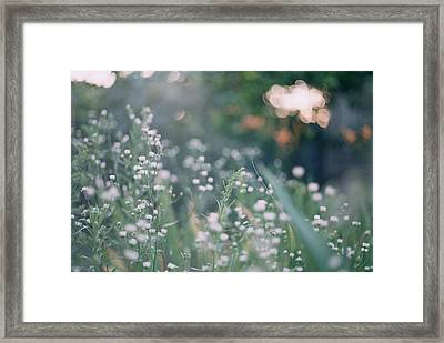The Flowers In The After Sunset Light Framed Print