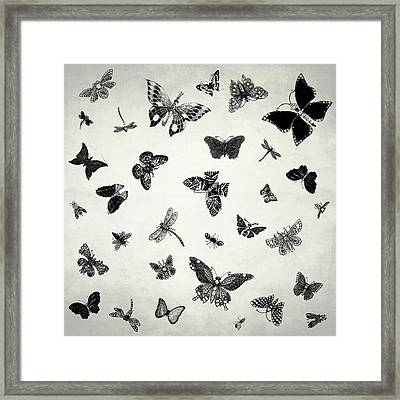 The Flutter And Fly Framed Print by Mark Rogan