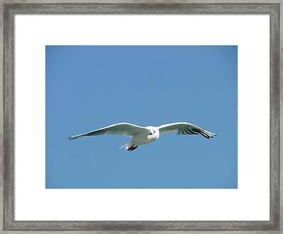 The Fly  Framed Print by Rita Fetisov