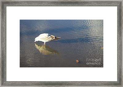 The Flying Narcissus Framed Print