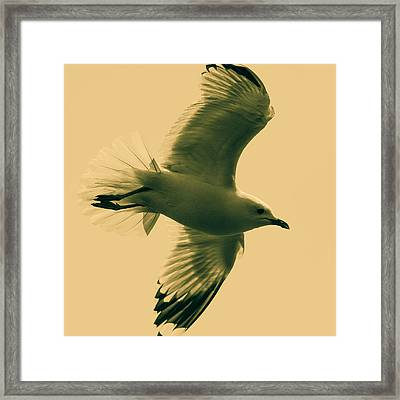 The Flying Seagull  Framed Print by Tommytechno Sweden
