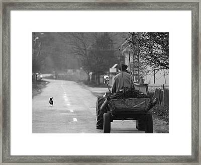 The Followers Framed Print by Mihnea Turcu
