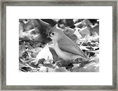 The Forager Framed Print