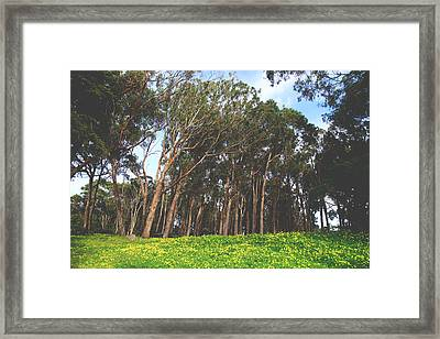 The Forest Awaits Framed Print by Laurie Search