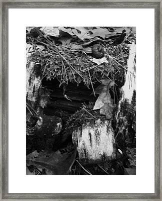 The Forest Floor Framed Print by Anna Villarreal Garbis