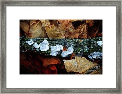 The Forest Floor - Cascade Wi Framed Print
