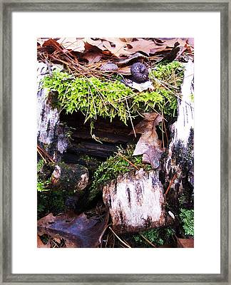 The Forest Floor II Framed Print by Anna Villarreal Garbis