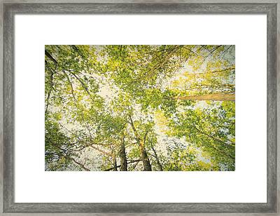 The Forest From Below Framed Print