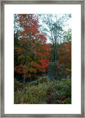 Framed Print featuring the photograph The Forest by Joseph G Holland