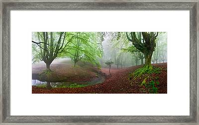 The Forest Maravillador IIi Framed Print by Juan Pixelecta