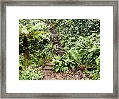 The Forest Stairwell Framed Print by Rae Tucker