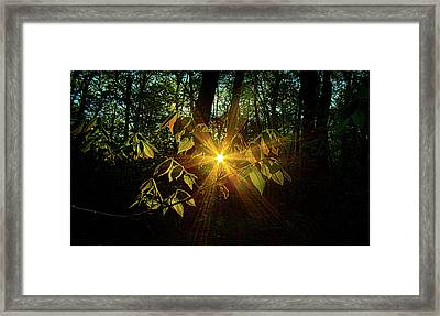 The Forest Through The Trees Framed Print