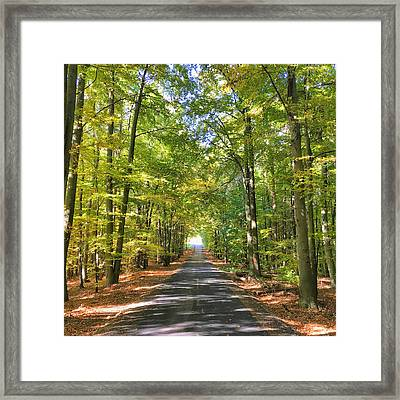 Framed Print featuring the photograph Road In The Forrest In Austria by Chris Feichtner
