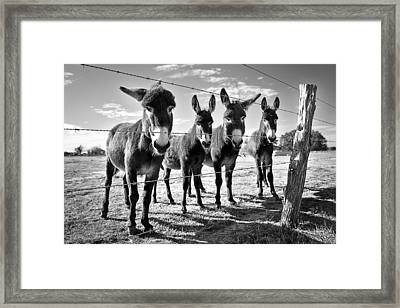 Framed Print featuring the photograph The Four Amigos by Sharon Jones