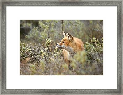 The Fox And Its Prey Framed Print by Roeselien Raimond