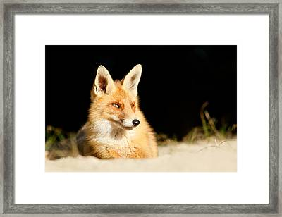 The Fox And The Light Framed Print