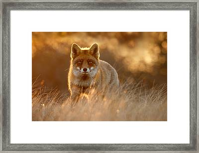 The Fox With The Golden Face Framed Print by Roeselien Raimond