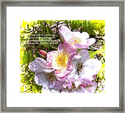 The Frailty Of Summer Roses And Of Love Framed Print by Brenda Kean