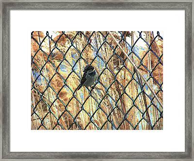 The Free Sparrow Framed Print by Jennifer Allen