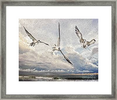 The Freedom Of Flight Framed Print